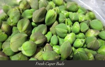 Fresh caper buds