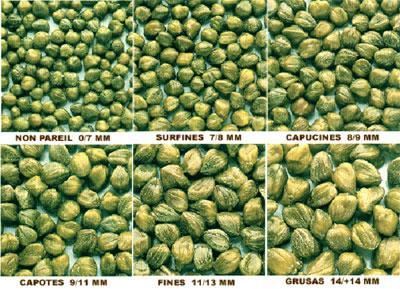 Caper size chart